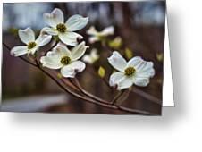 Missouri Dogwoods Greeting Card