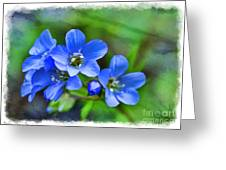 Missouri Wildflowers 5  - Polemonium Reptans -  Digital Paint 1 Greeting Card