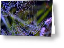 Mist In The Web  Greeting Card