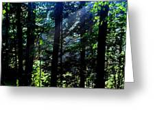 Mist, Leaves And Sunlight Greeting Card