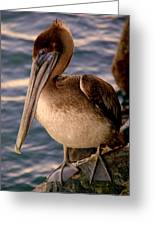 Mister Pelican Greeting Card