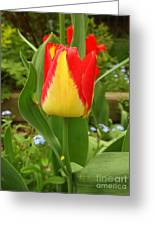 Mister Tulip Waving Salute Greeting Card
