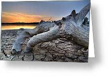 Mistery Old Tree Greeting Card