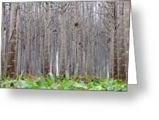 Mistery Poplars Woods  Greeting Card
