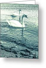 Misty Blue Swans Greeting Card