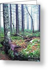 Misty Forest Gaudineer Scenic Area Greeting Card