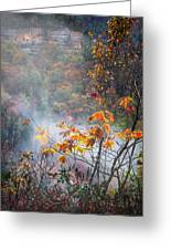 Misty Maple Greeting Card