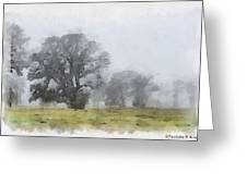 Misty Morn Greeting Card