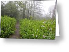 Misty Morning Cranberry Glades Greeting Card