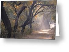Misty Morning, Bharatpur, 2005 Greeting Card