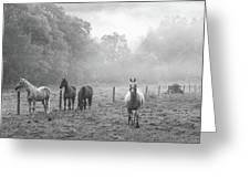 Misty Morning Horses Greeting Card