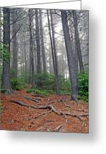 Misty Morning In An Algonquin Forest Greeting Card