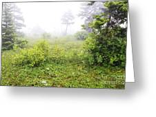Misty Morning In The Glades Greeting Card