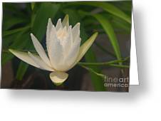 Misty Morning Pond Lilly Greeting Card