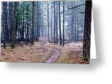 Misty Morning Trail In The Woods Greeting Card