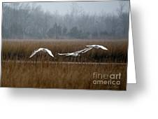 Misty Mute Swans Soaring South Jersey Wetlands Greeting Card