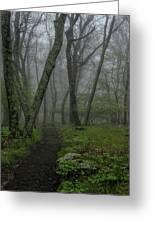 Misty Path Greeting Card