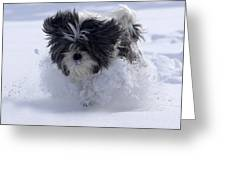 Misty Runs Through The Snow Greeting Card