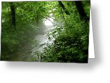 Misty Stream Greeting Card by Tina Valvano