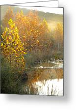 Misty Sunrise At Lost Maples State Park Greeting Card
