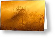 Misty Swamp Sunrise Greeting Card