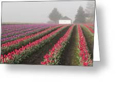 Misty Tulip Fields Iv Greeting Card