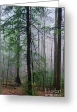 Misty Winter Forest Greeting Card