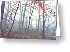 Misty Woodland Showing The Last Fall Color Greeting Card