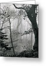 Misty Woods, Juniper Greeting Card