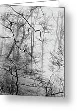 Misty Woods, Whitley Mill Greeting Card