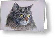 Mitze Maine Coon Cat Greeting Card