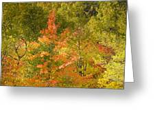 Mixed Autumn Greeting Card