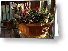 Mixed Basket, Balcony Garden, Hunter Hill, Hagerstown, Maryland, Greeting Card