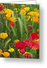Mixed Poppies Greeting Card