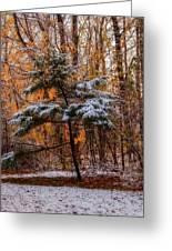 Mixed Seasons Greeting Card