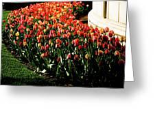Mixed Tulips Greeting Card