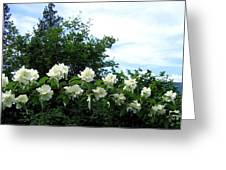 Mock Orange Blossoms Greeting Card