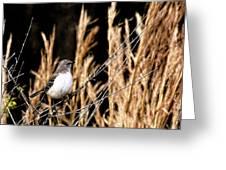 Mocking Bird 2 Greeting Card