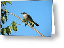 Mocking Bird Out On A Limb Greeting Card