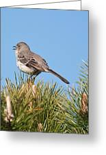 Mockingbird 02 Greeting Card