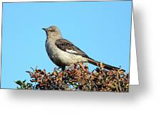 Mockingbird . 7682 Greeting Card by Wingsdomain Art and Photography