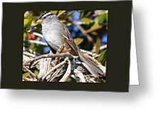 Mockingbird Finally Being Quite Greeting Card
