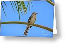 Mockingbird In A Palm Tree Greeting Card