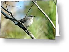Mockingbird In Green Greeting Card