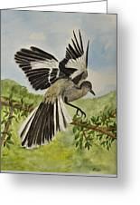 Mockingbird Landing Greeting Card
