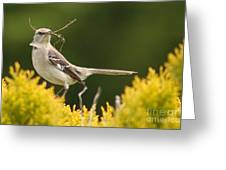 Mockingbird Perched With Nesting Material Greeting Card