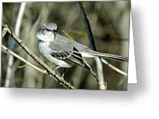 Mockingbird Side Glance Greeting Card