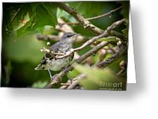 Mockingbird Youngster Greeting Card