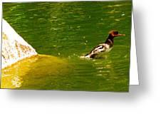 Mohawk Duck Greeting Card