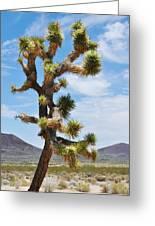 Mojave Joshua Tree Greeting Card